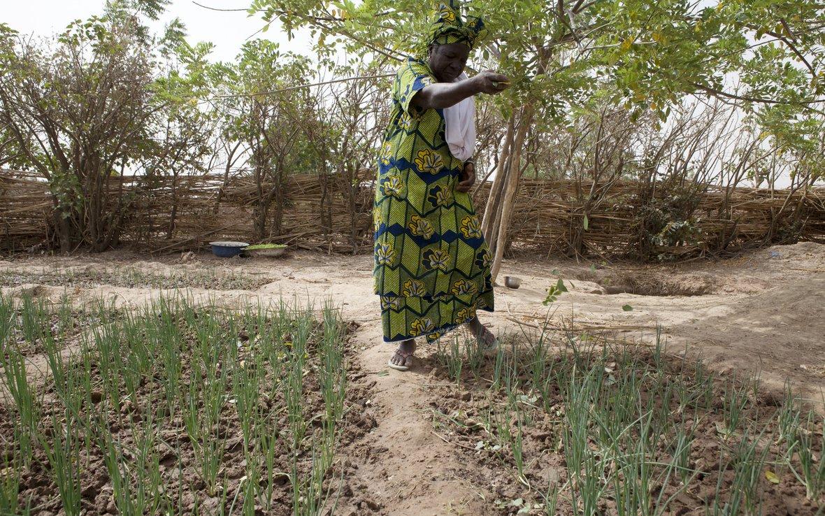 A tree grows in Mali | Oxfam