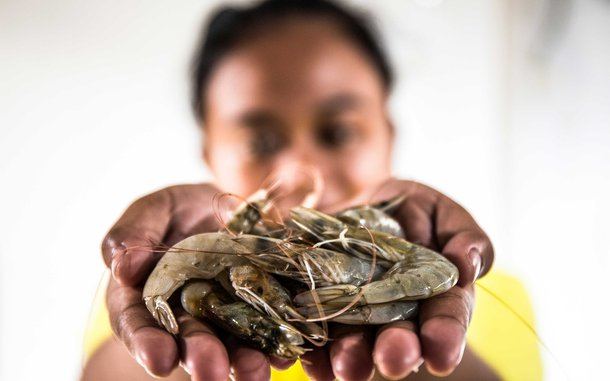 indonesia-seafood-worker-hands-shrimp-onl-16276-h_1220x762.jpg