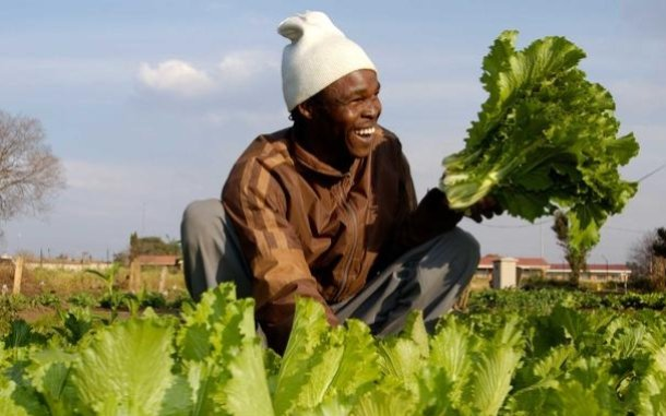 man-farmer-lettuce-south-africa-ous-560_610x381.jpg