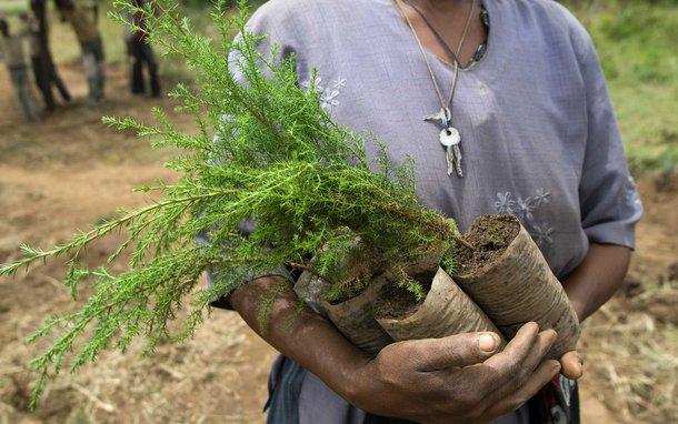 tree-planting-ethiopia-ous-35322.jpg